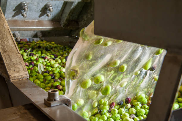 olive washing phase - defoliator stock pictures, royalty-free photos & images