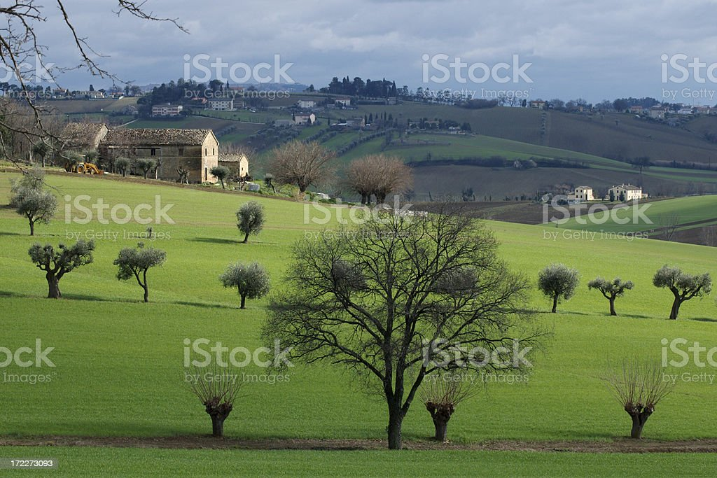 olives and oak royalty-free stock photo