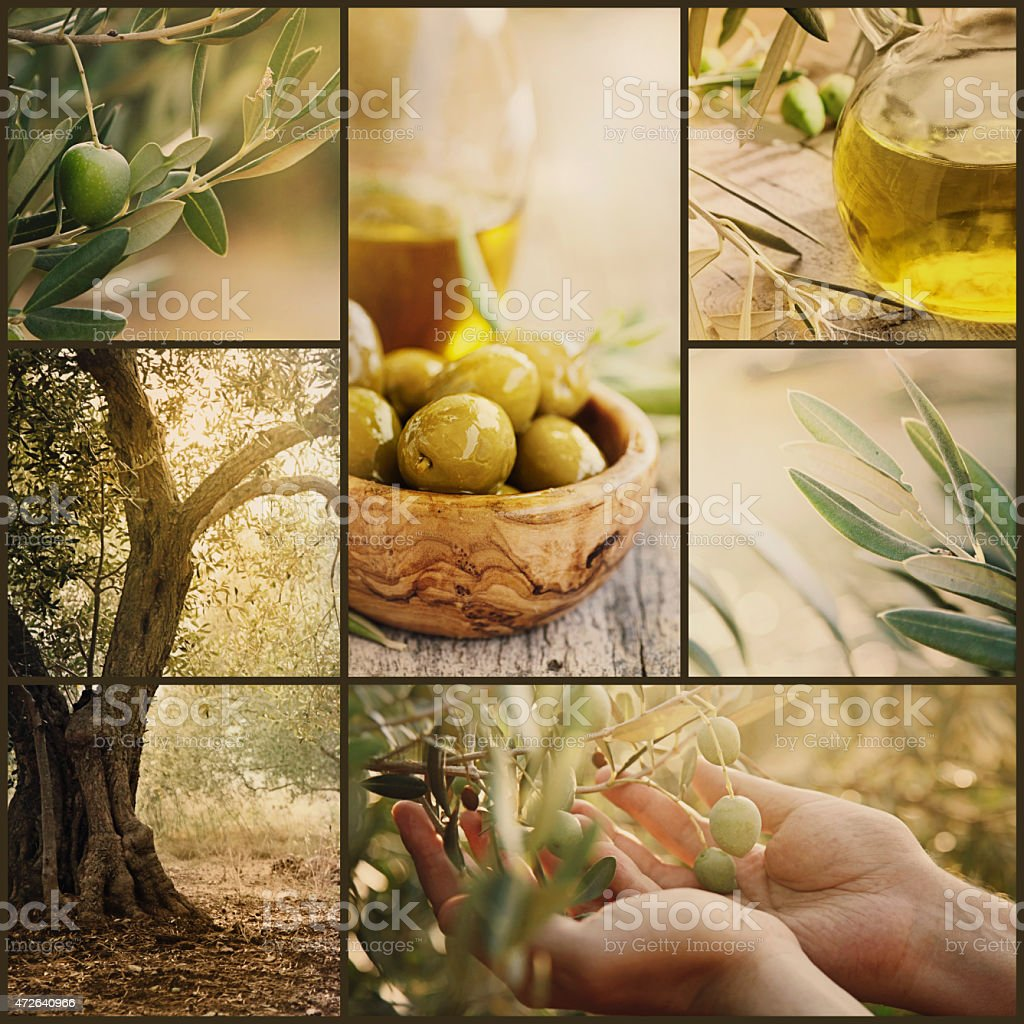 Olives collage stock photo