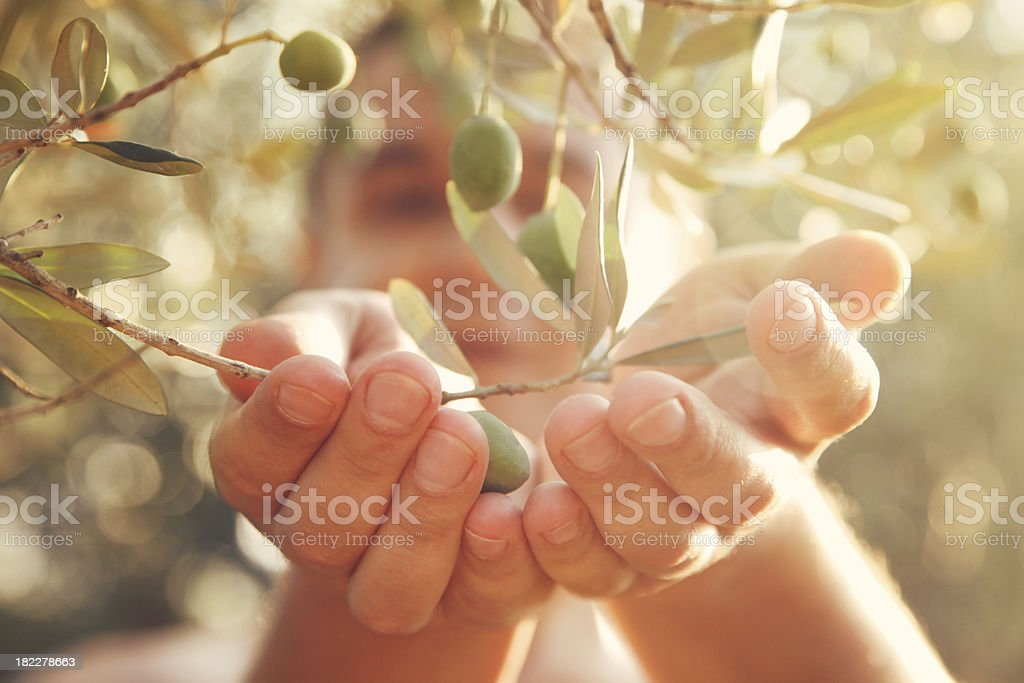 Récolte des Olives - Photo