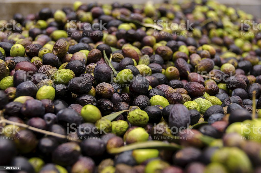 olives in a mill stock photo