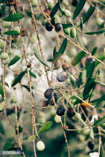 Olives in October