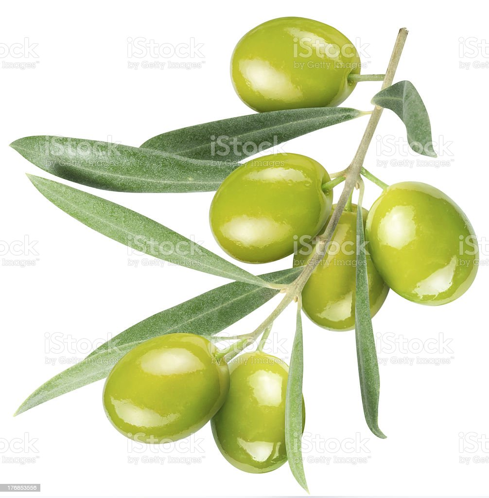 Olives on branch with leaves stock photo