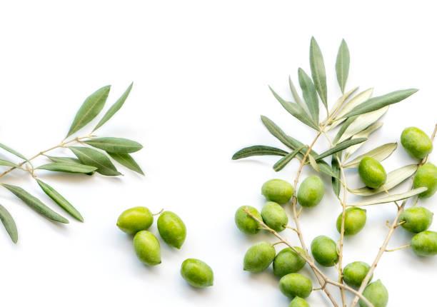 olives on white - ramoscello d'ulivo foto e immagini stock