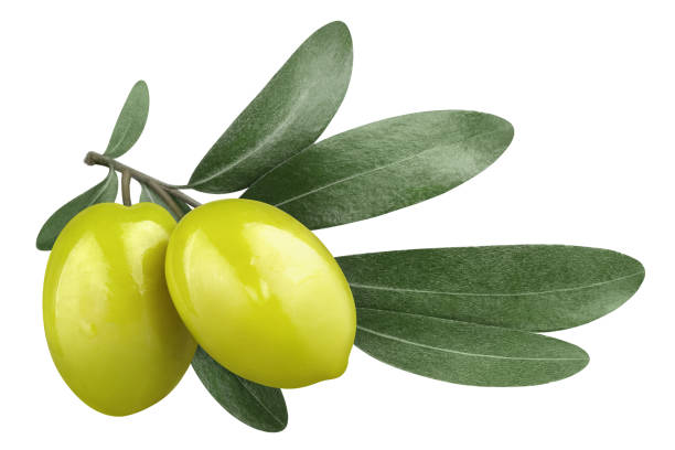 Olives on white Olive branch with two delicious green olives, isolated on white background olives stock pictures, royalty-free photos & images