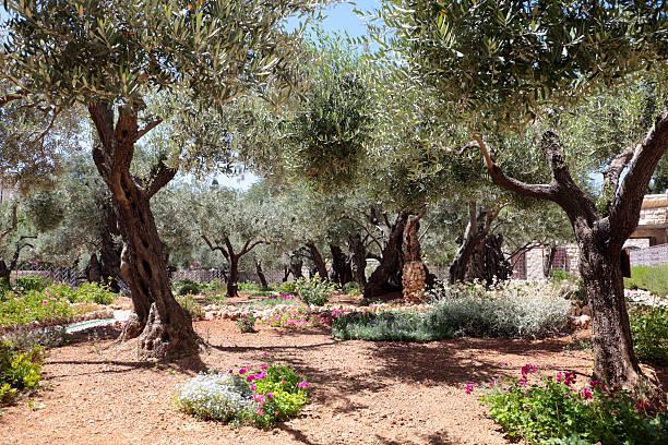 Olives stock photo
