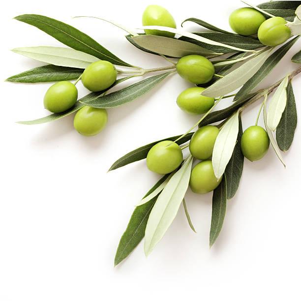 olive - ramoscello d'ulivo foto e immagini stock