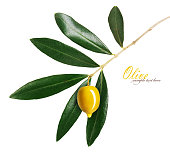 Branch with green olives isolated on a white background