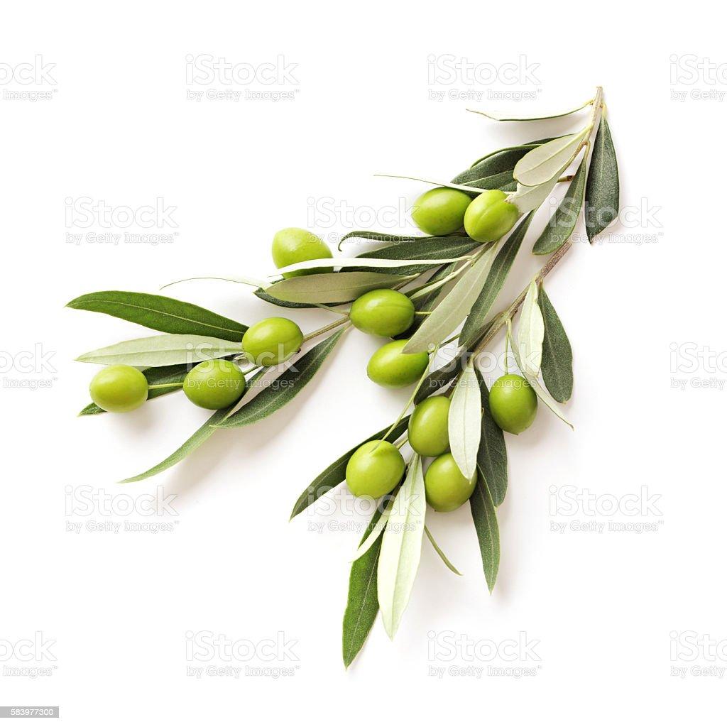 olives  - Lizenzfrei Ast - Pflanzenbestandteil Stock-Foto