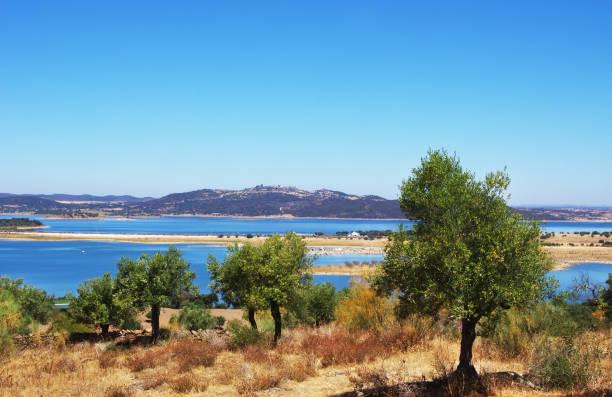 olives tree near alqueva lake - fotos de barragem portugal imagens e fotografias de stock