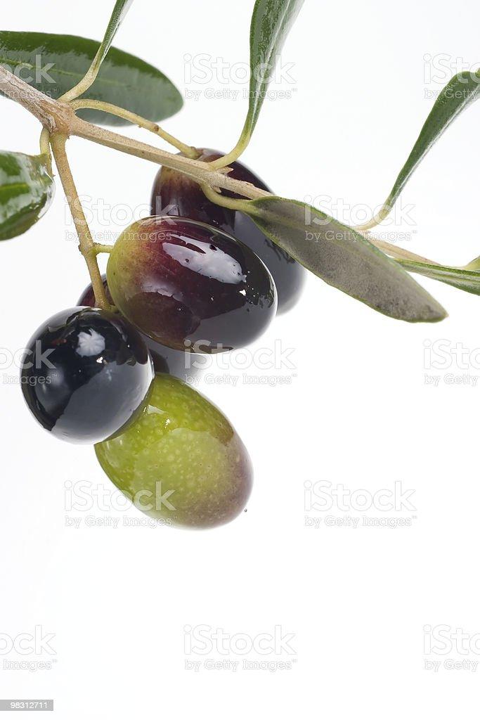 Olives twig royalty-free stock photo