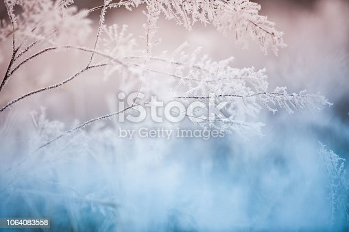Сolorful frozen grass background
