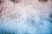 istock Сolorful frozen grass background 1064083558