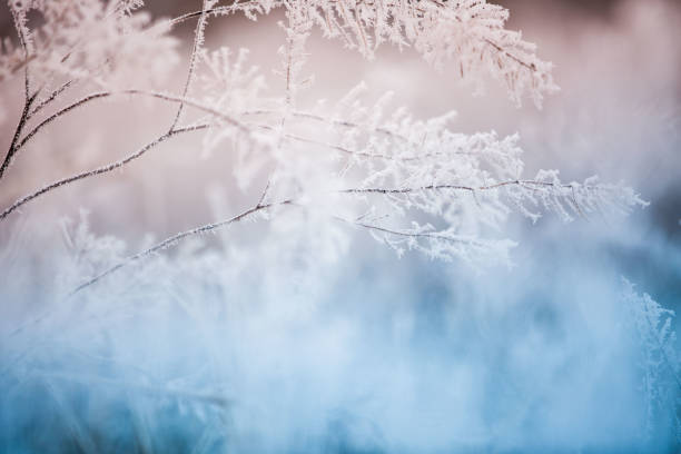 сolorful frozen grass background - ice crystal stock pictures, royalty-free photos & images