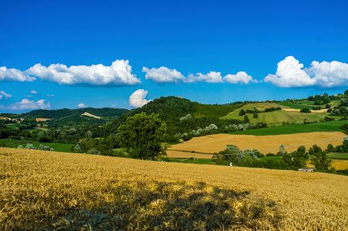 Oltrepo Pavese landscape color image
