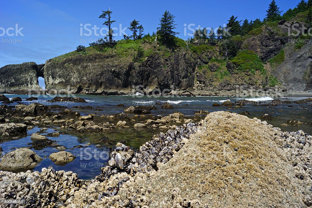 Olympic Barnacle Cove stock photo