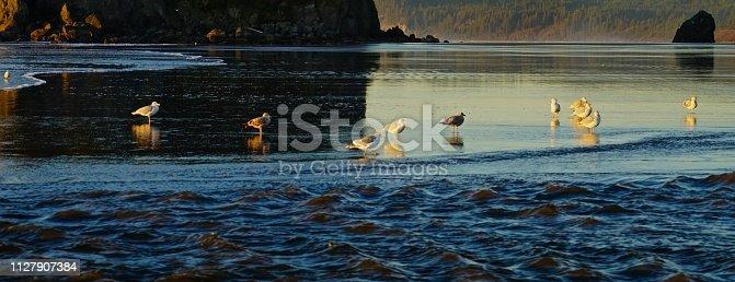 Northwest Washington's Olympic Peninsula. Olympic National Park/Ruby Beach.