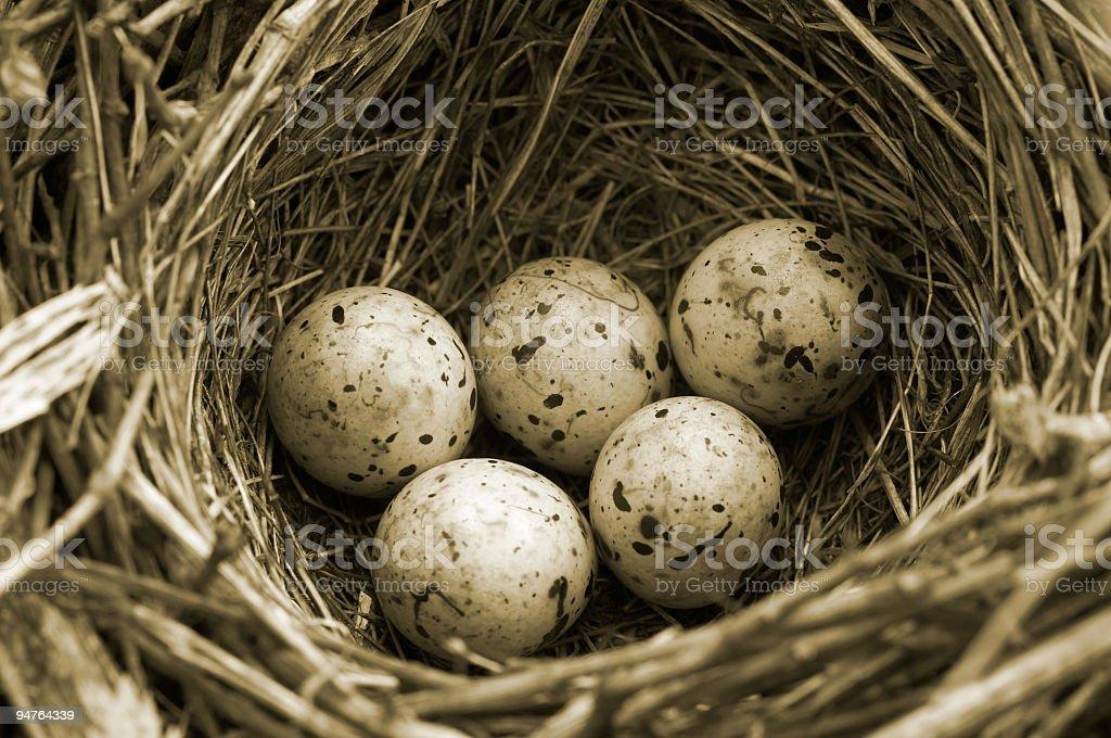 Olympic eggs (sepia version) stock photo