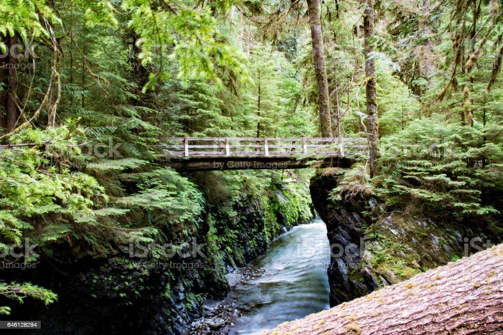Olympic National Park, United States royalty-free stock photo