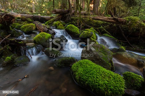 Washington State, Olympic Peninsula, Temperate Rainforest, Olympic National Park, Sol Duc Valley