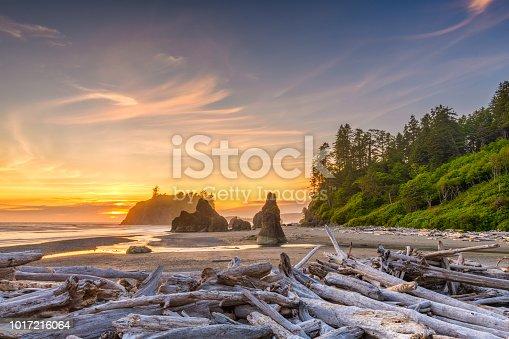istock Olympic National Park, Washington, USA 1017216064
