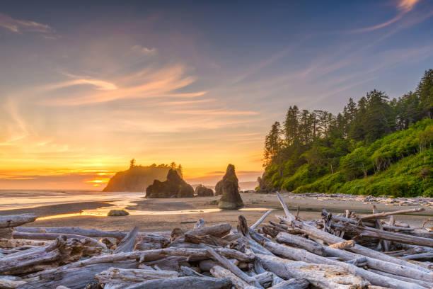 Olympic National Park, Washington, USA Olympic National Park, Washington, USA at Ruby Beach with piles of deadwood. washington state stock pictures, royalty-free photos & images