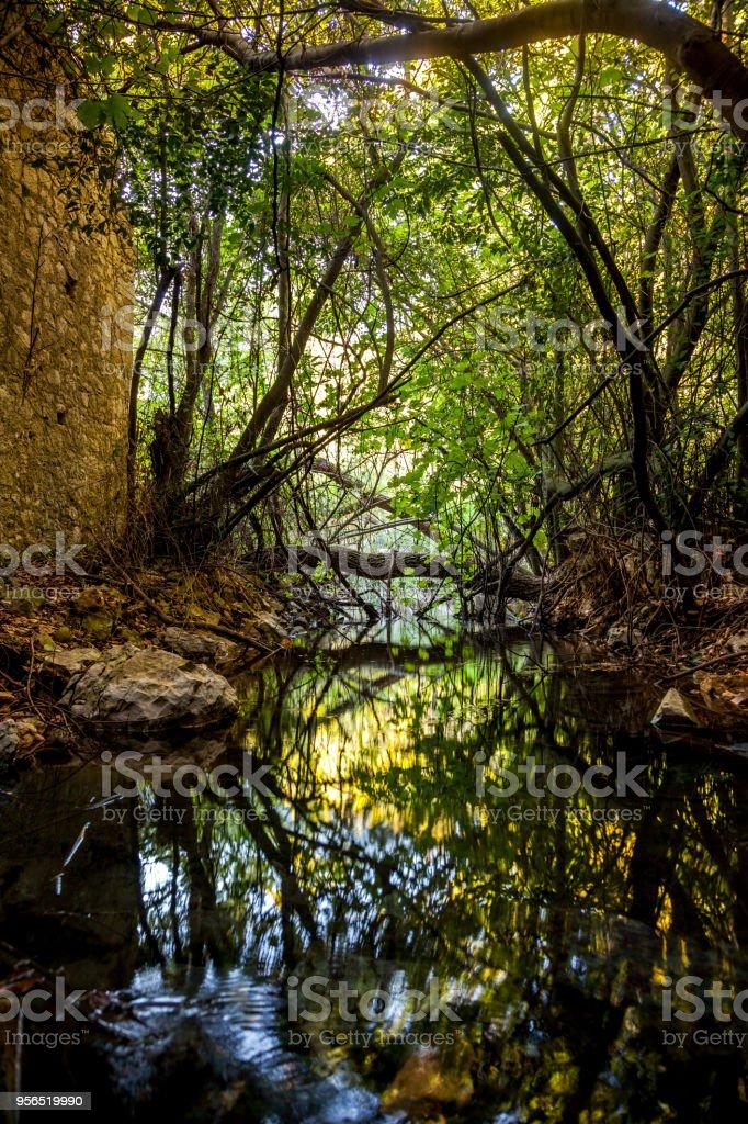 Olympos-Antalya - Lizenzfrei Baum Stock-Foto