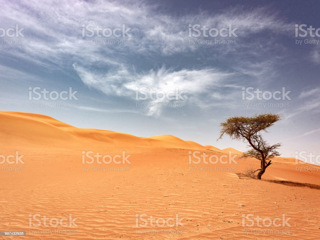 Oman Lonely Desert Tree Wahiba Sands royalty-free stock photo