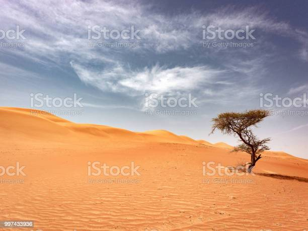 Oman Lonely Desert Tree Wahiba Sands Stock Photo - Download Image Now
