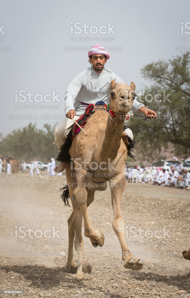 omani man riding a  camel on a dusty countryside road stock photo