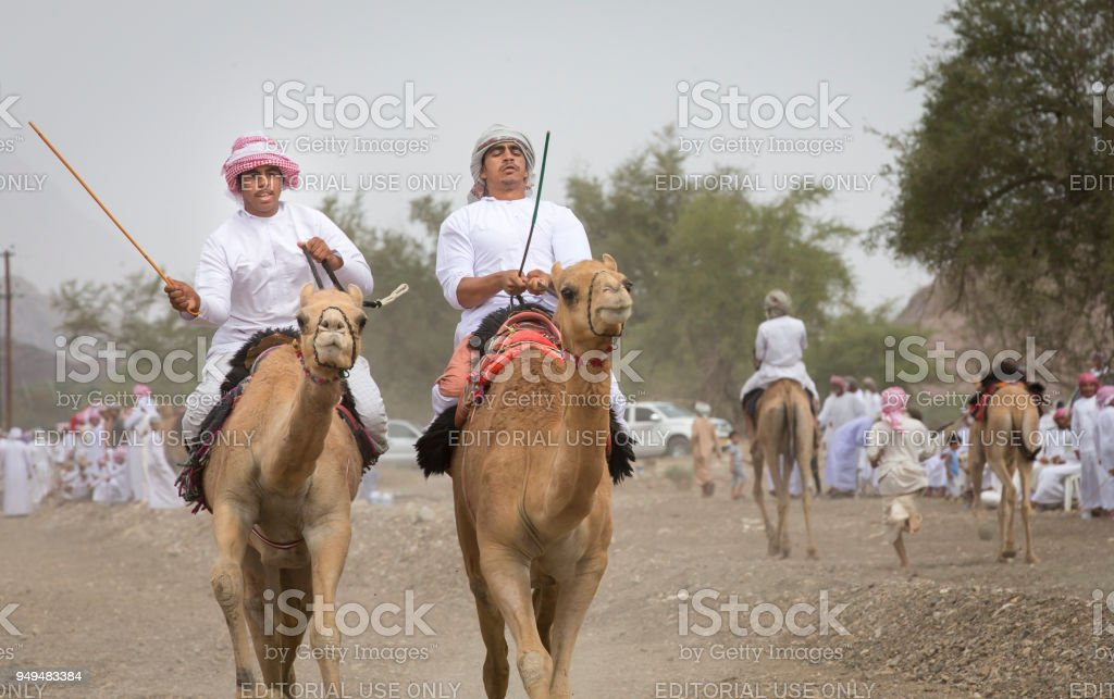 omani men racing camels on a dusty countryside road stock photo