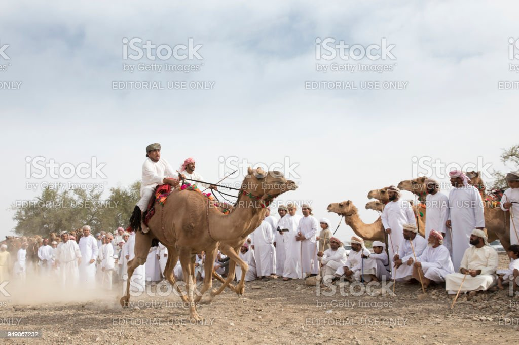 omani men racing on camels ina dusty countryside road with people cheering at the background stock photo