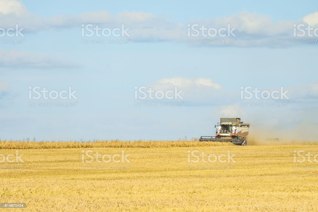 Ð¡ombine harvester are working on harvesting in the field. Agricultural background. stock photo