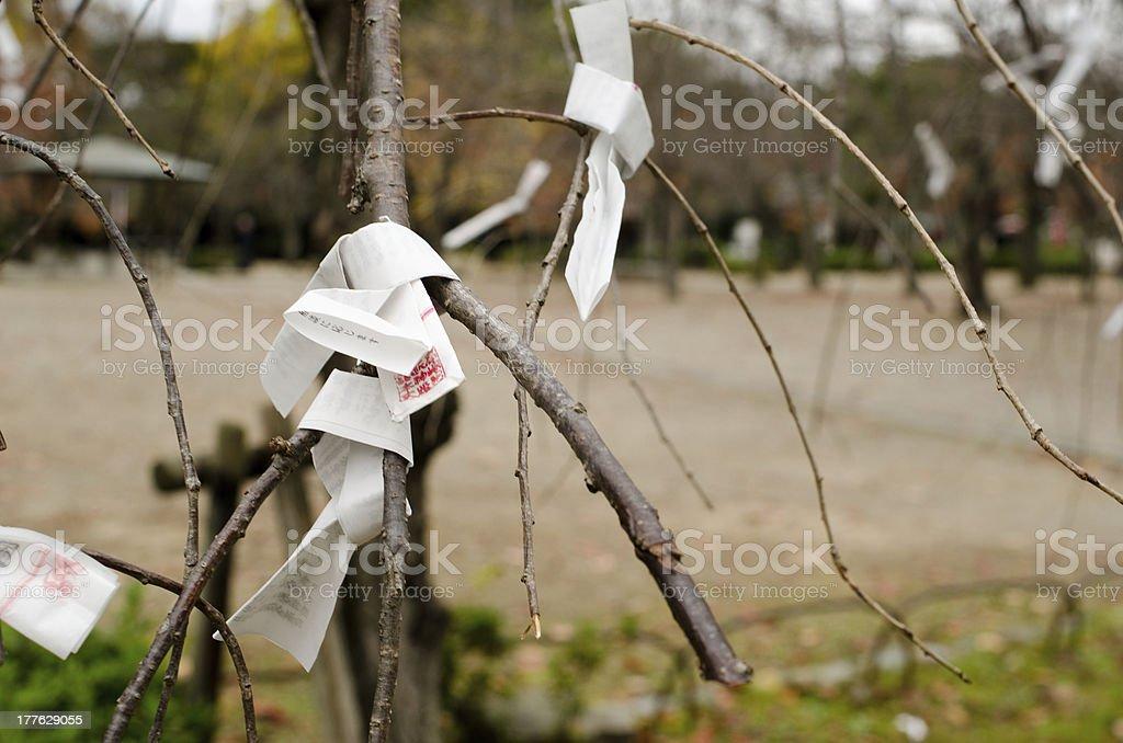 Omikuji on a tree royalty-free stock photo