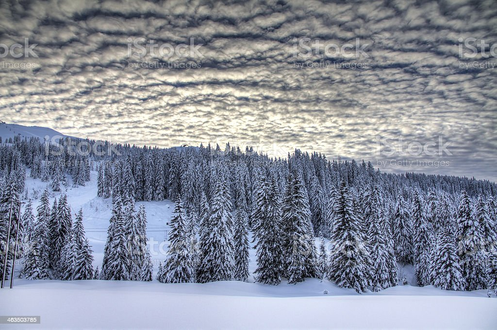 Ominous winter landscape stock photo