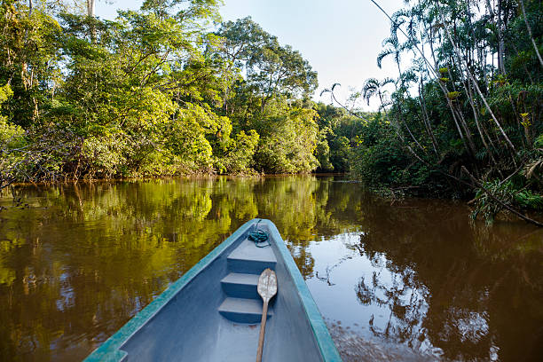 on a boat in the amazonian jungle. - 에콰도르 뉴스 사진 이미지