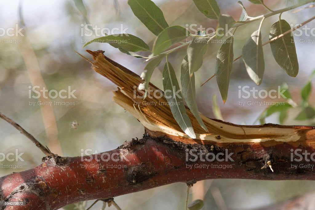on a broken tree branch stock photo