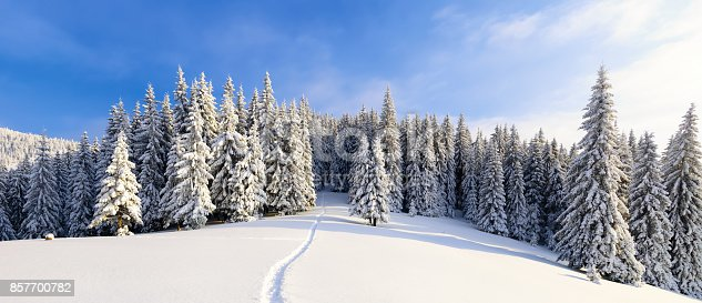 istock On a frosty beautiful day among high mountains and peaks are magical trees covered with white fluffy snow against the magical winter landscape. 857700782