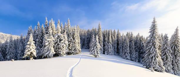 på ett frostigt vacker dag bland höga berg och toppar är magiska träd täckta med vita fluffiga snön mot magiska vinterlandskapet. - snötäckt bildbanksfoton och bilder