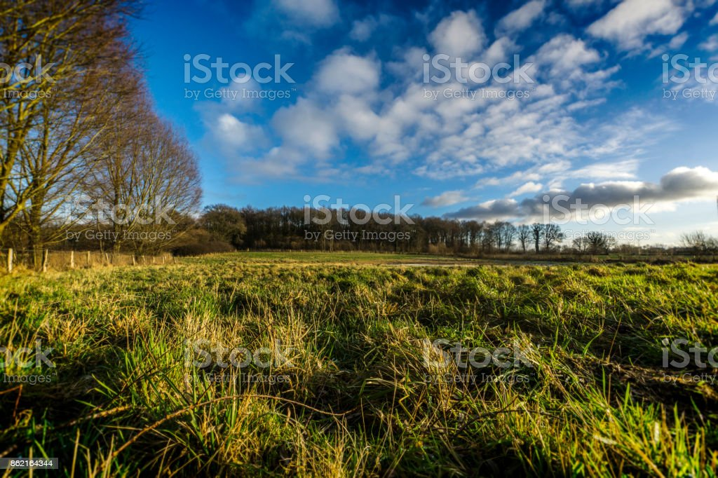 On a meadow on a sunny day stock photo