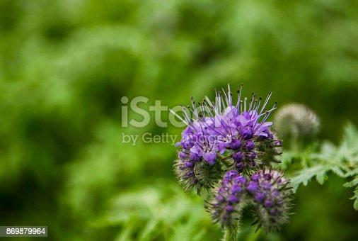 istock On a meadow,flower. 869879964