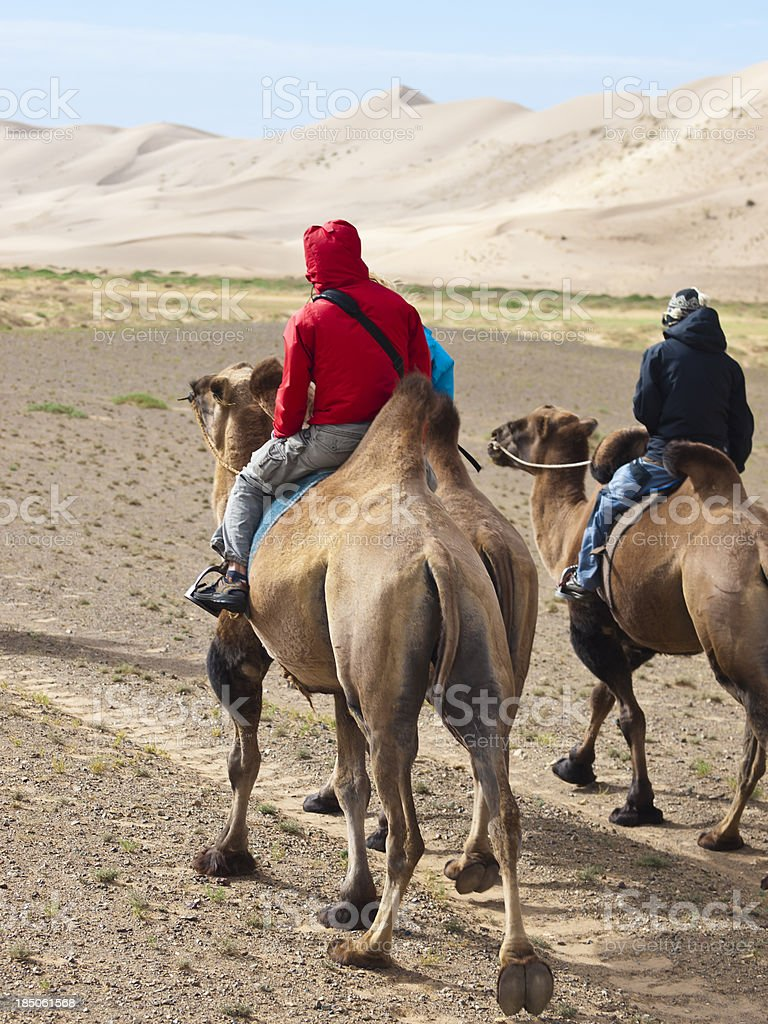On Camel royalty-free stock photo