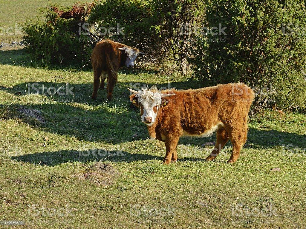 On farm royalty-free stock photo