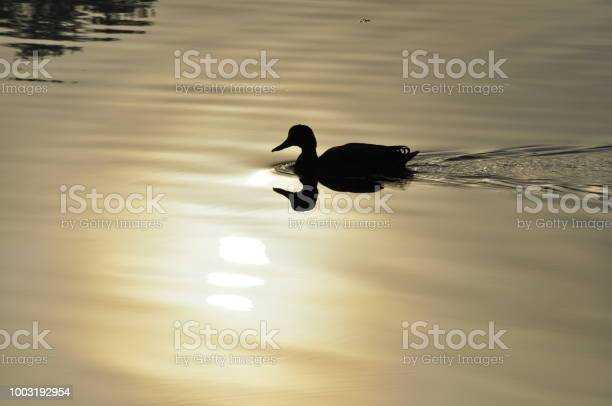 Photo of On Golden Pond