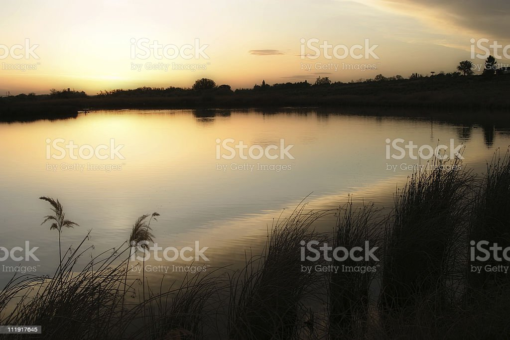 On Golden Pond royalty-free stock photo