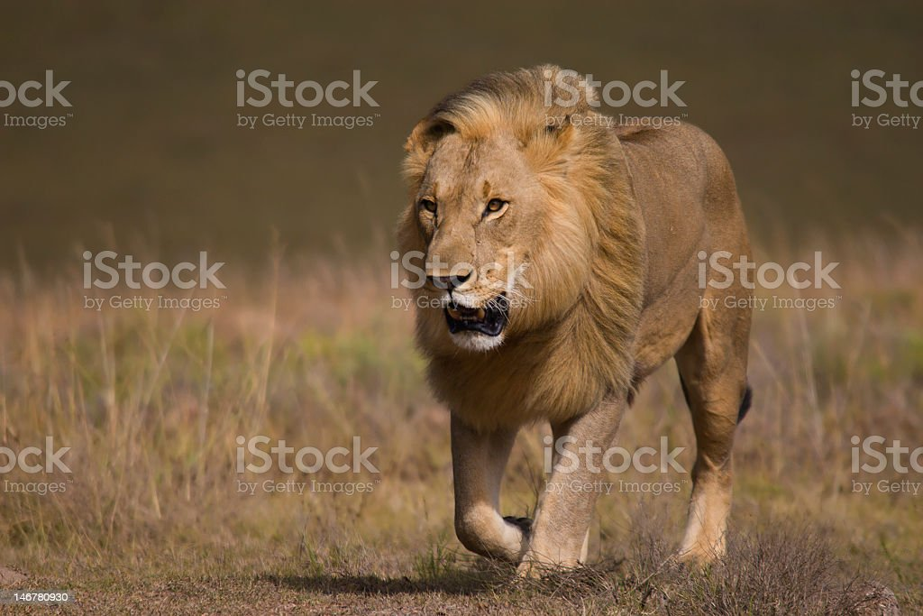 On his way royalty-free stock photo