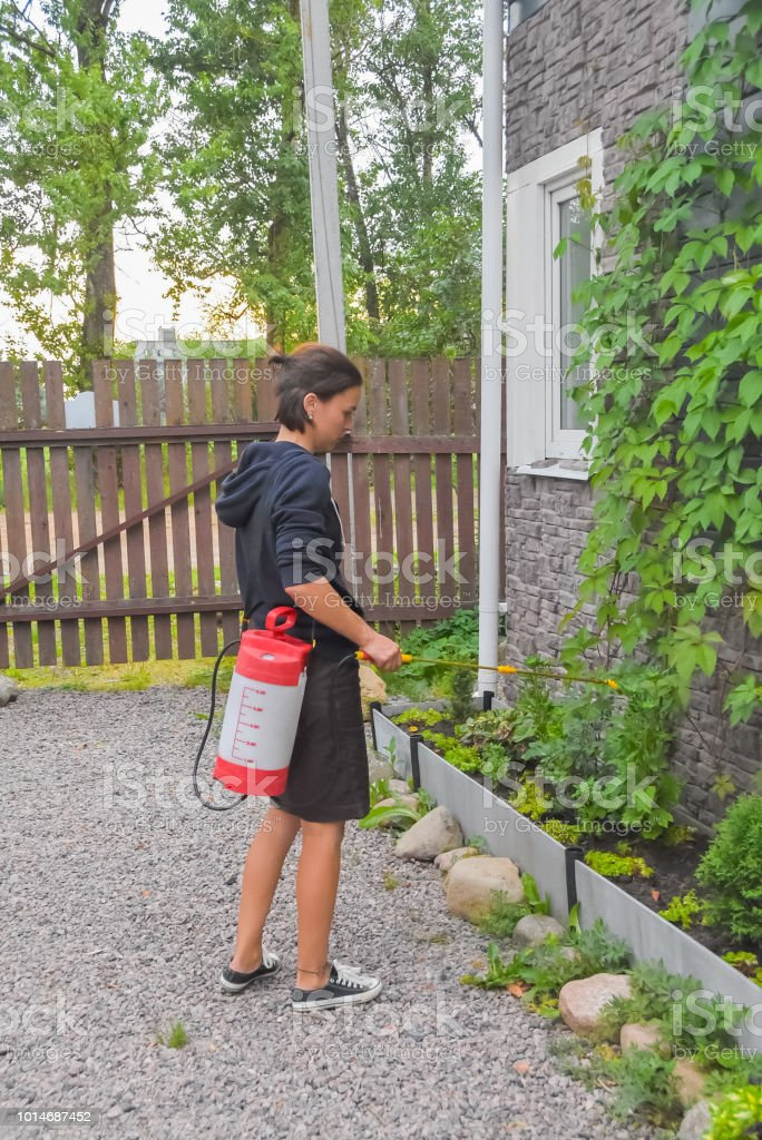 girl gardener treats bushes and trees with sprayer pesticides and...