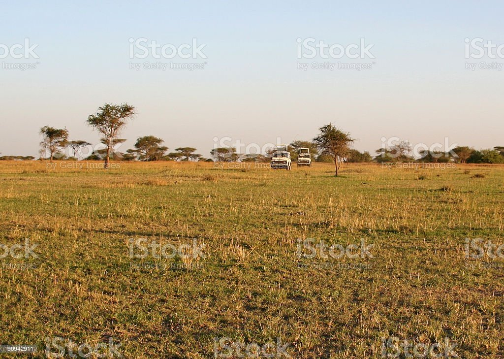 On Safari in the Serengeti royalty-free stock photo