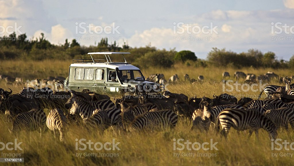 On safari stock photo