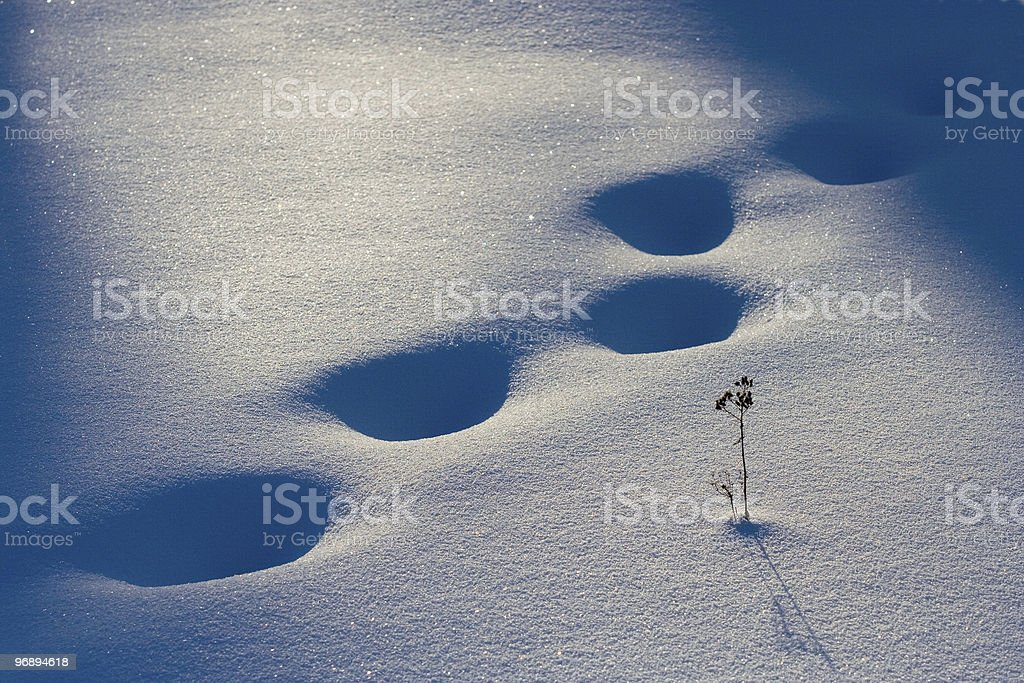 On snow royalty-free stock photo